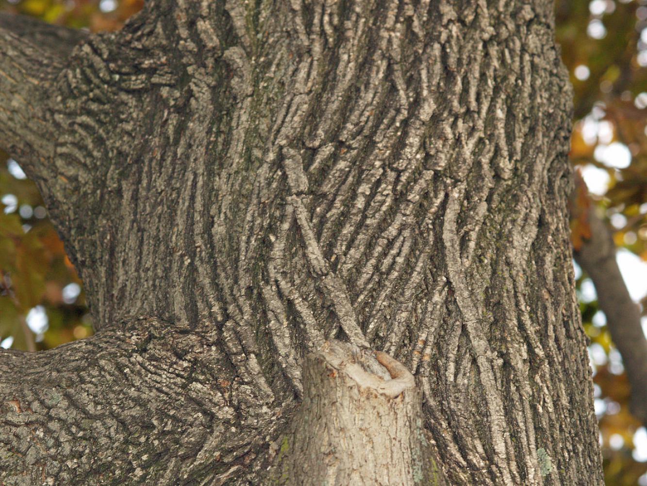 Folco древеская кора